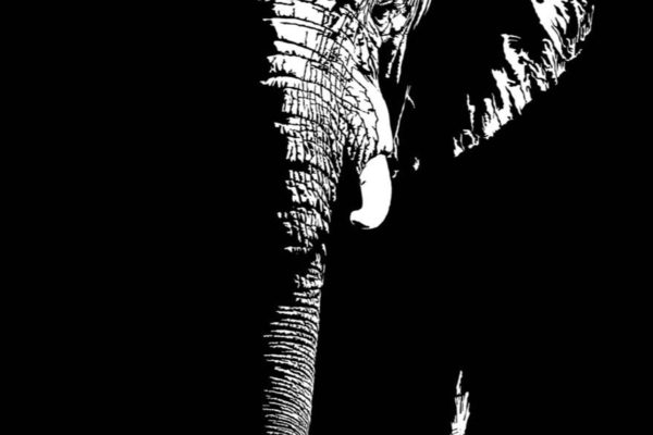 Gondwana-elephant